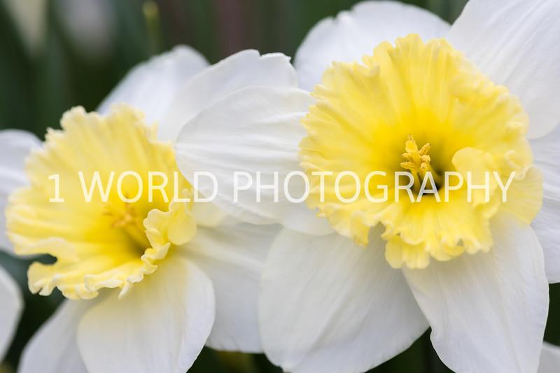 20190416Spring Flowers_Cantigny 4_17_19152--9.jpg