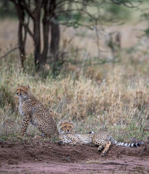 Tanzania_Feb_2018-1195.jpg