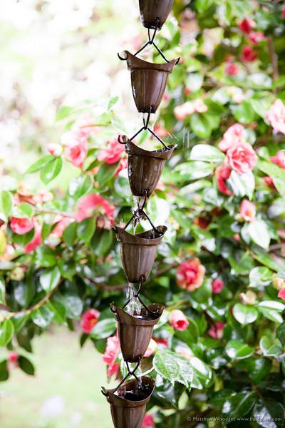 Woodget-140419-158--copper, flower - Plants, rain, Spring.jpg