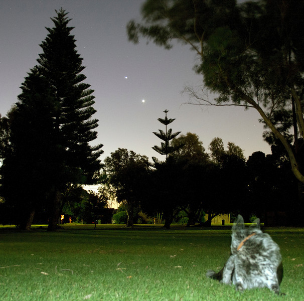 Venus (bottom) and Jupiter at the Park with Cinders - 14/03/2012