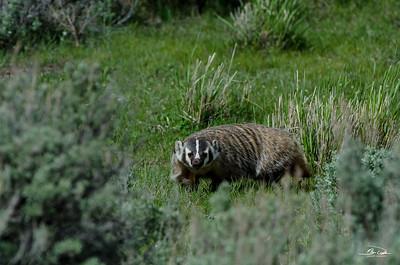 Wildlife - Medium Animals
