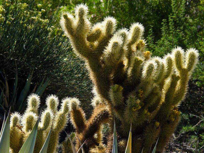 jul26_cactus.jpg