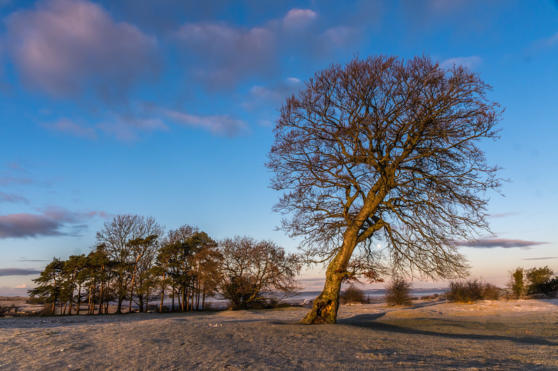 Lone Tree and BP Copse shadow out_5817.jpg