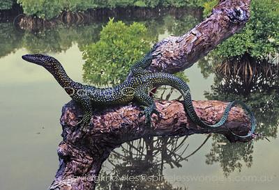 New Guinea Lizards Varanidae (Monitors, Goannas)