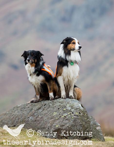 LAMRT Search Dogs Ted & Skye Mar 2015