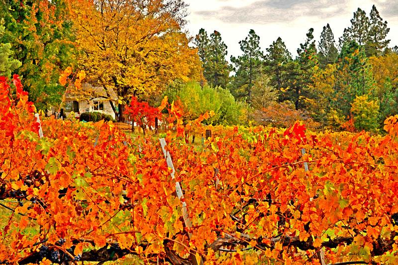 smith vineyards 1 11-17-2010.jpg