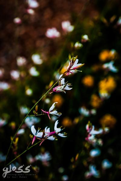 1gloss photography studios ©-30.jpg