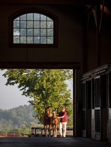 Taylor Made farm scenics 5.28.18.