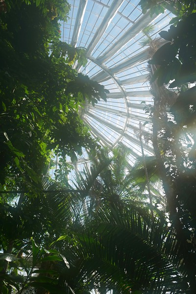 Inside the Palm House (instantly fogged lens)