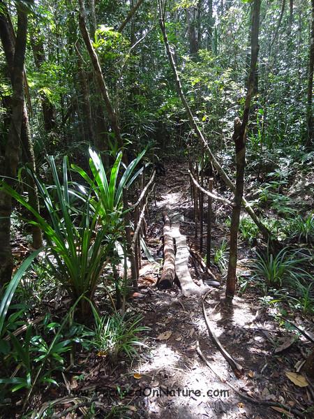 Masoala Private Reserve Hike