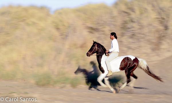 Morro Bay with Horses