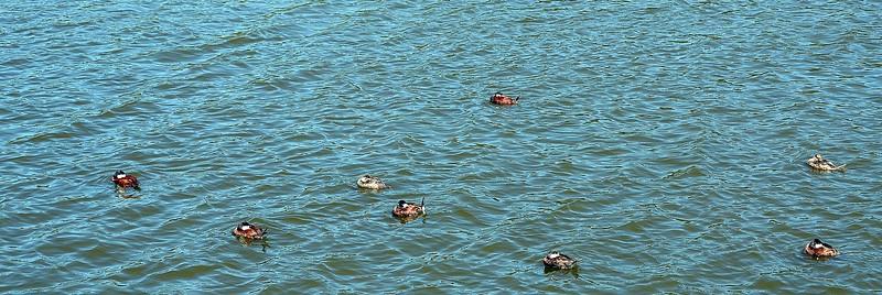 160416 Oso Flaco Lake