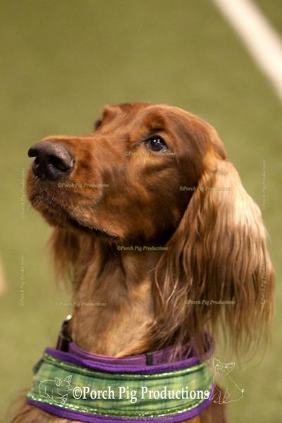 Dog agility trials  2014 Highlights