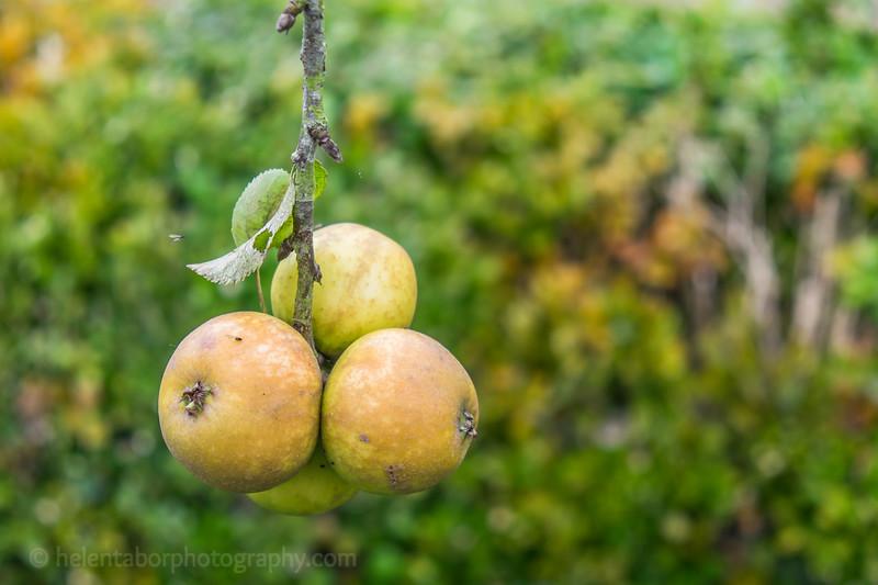 Hob Green autumn-13.jpg