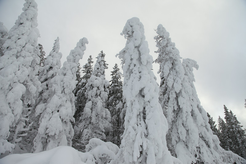Frozen trees!