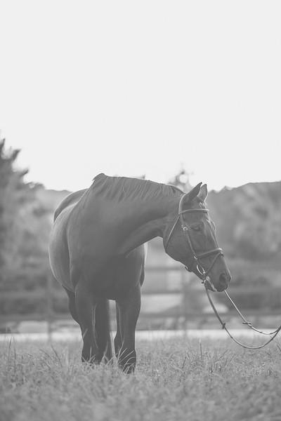 Horses-14.jpg