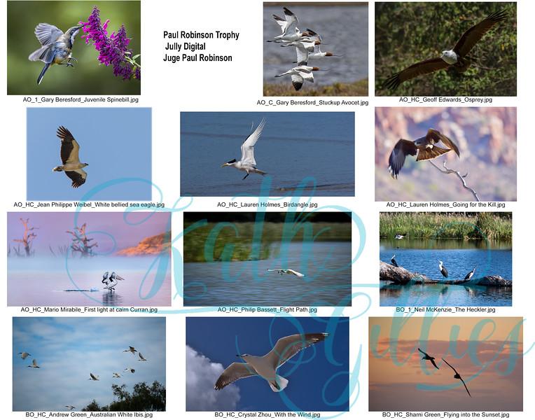 7 paul robinson birds digital.jpg