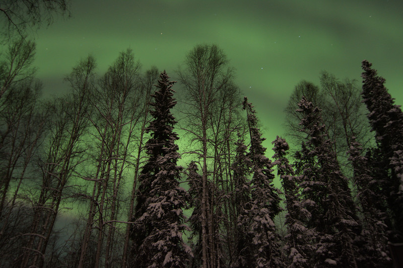 Aurora Through The Forest