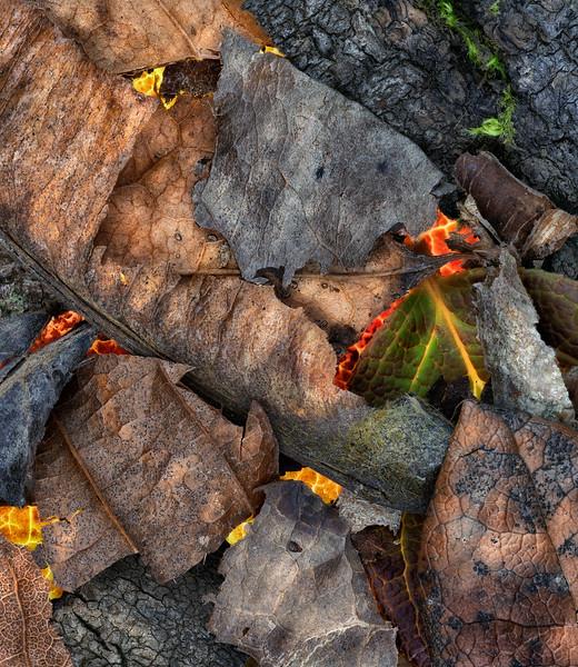 Woodland textures 1