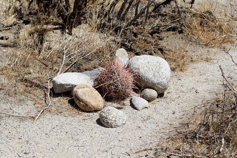 05 Cougar Canyon (87).JPG
