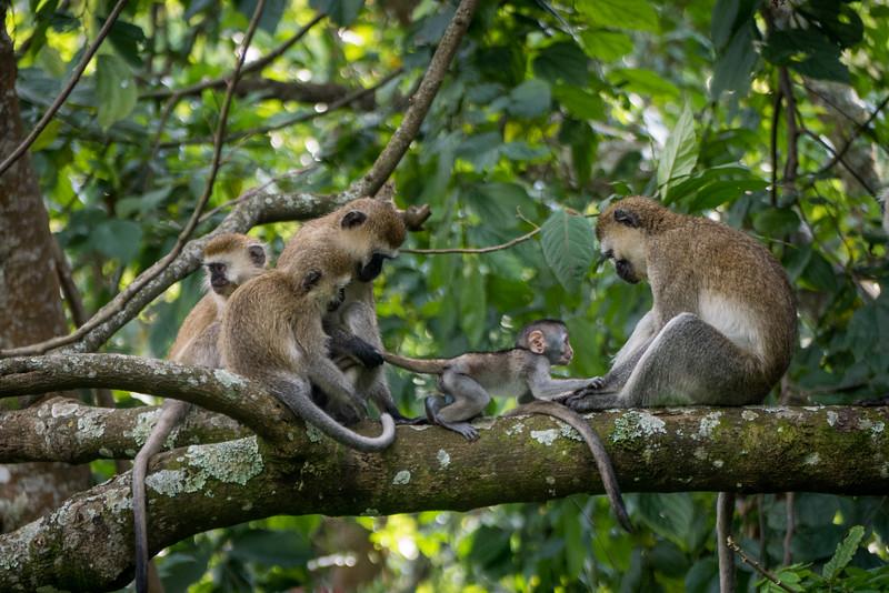 Nyugwe-Rwanda-61.jpg