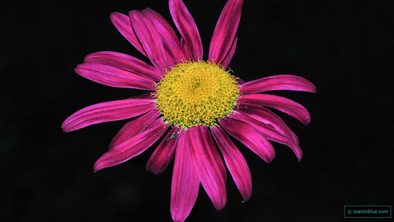 MM flower 1300 100-2011.jpg