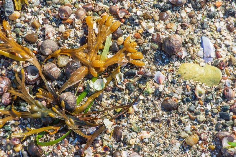 Maine-Acadia-shoreline-rocks5.jpg