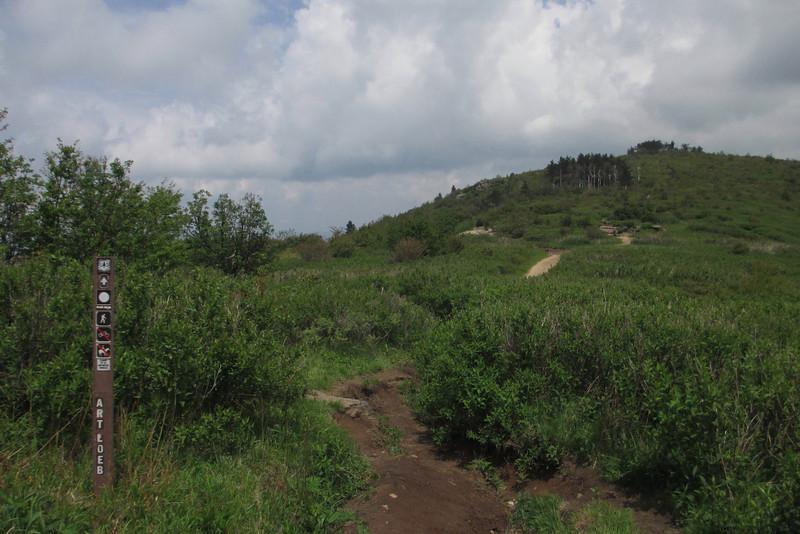 Art Loeb Trail (5,720')