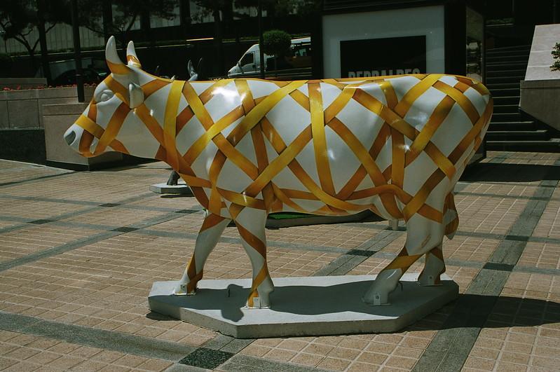 Vaca en cinta_1