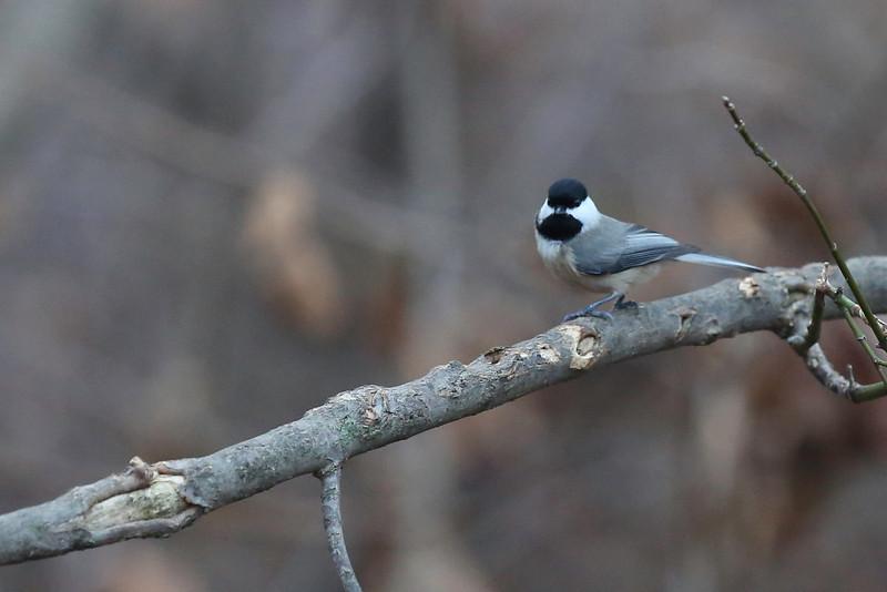 birds-102.jpg