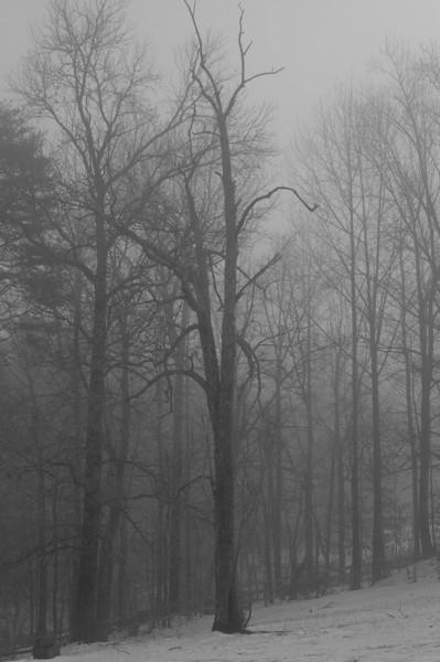 Winter Fog - January 2008