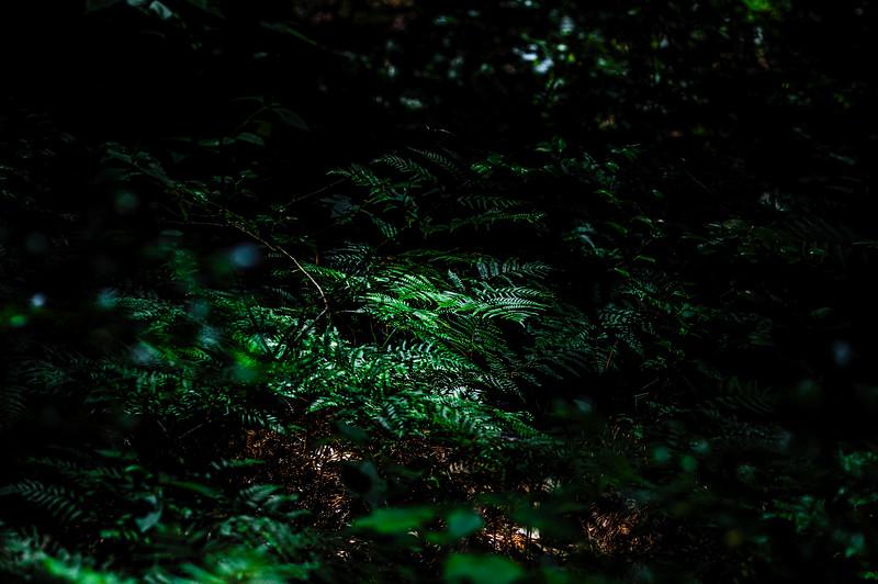 Ferns Huntsville State Forest-4204.jpg
