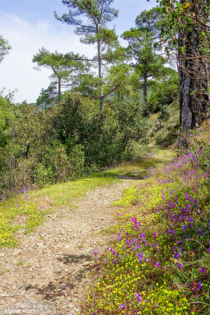 Stavros Nature Trails, Pafos Forest, Cyprus