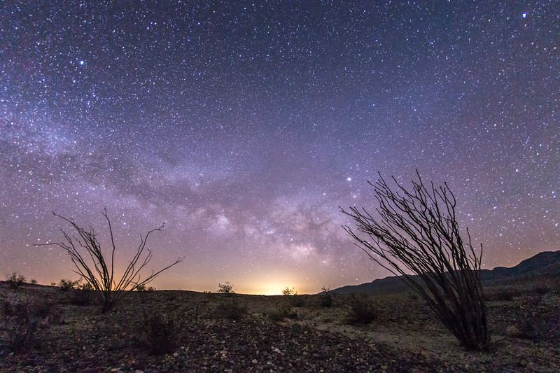 Milky Way rises above a pair of ocotillo
