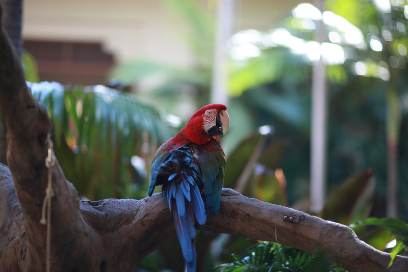 Kauai_D5_AM 214.jpg
