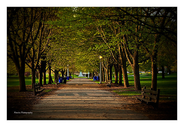 Trees - Lincoln Park, Chicago 2010