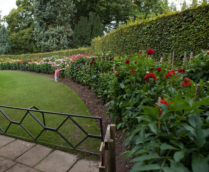 Dahlia Garden at Anglesey Abbey, Cambridgeshire
