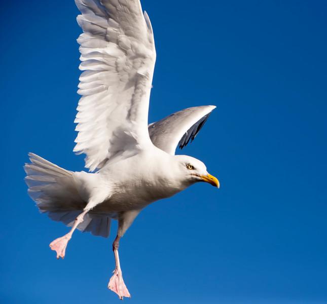 Landing!