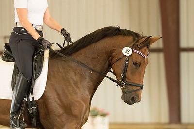Horse 95