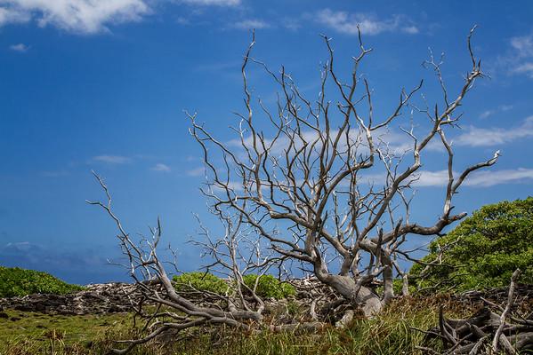 Waihe'e Coastal Dunes & Wetlands Reserve - Maui, Hawaii 2014