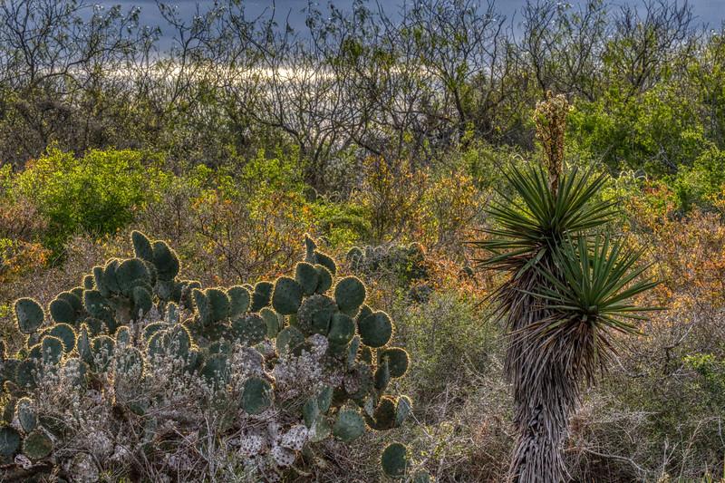 Laguna Atascosa NWR 2020-4.jpg