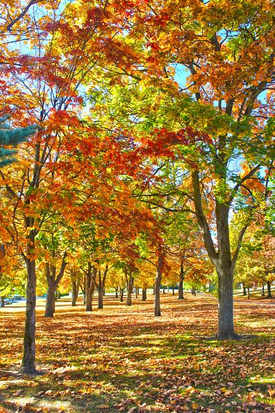 Fall at Minnehaha Park...