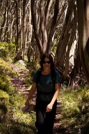 20120126 Australia Day Baw Baw walk