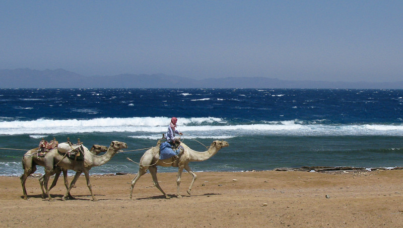 Camel herder with Saudi Arabia in the background  Dahab, Egypt
