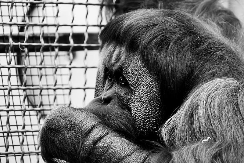 Philadelphia Zoo 046.jpg