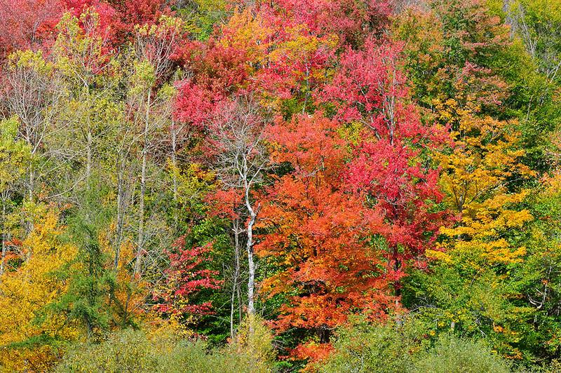 autumn-2.jpg
