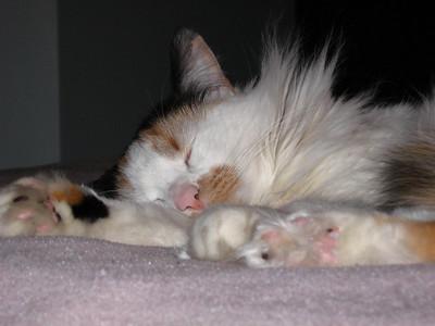 Roxie Cat