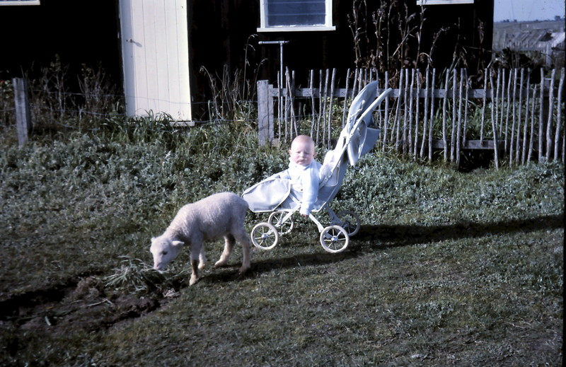 1964-7-10 (7) David 7 mths with pet lamb.JPG