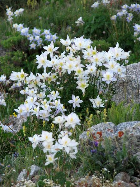 amh FLOWERS (1409).jpg