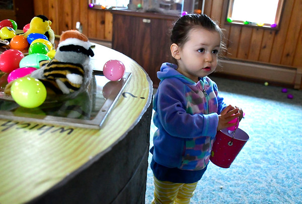 4/19/2019 Mike Orazzi | Staff Uggi Villagra,2, during the annual egg hunt at the Harry C Barnes Memorial Nature Center in Bristol on Friday morning.